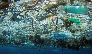 Ocean Garbage – Who's Responsible?
